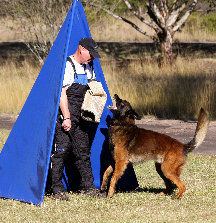 You Need This German Shepherd Rescue Ohio Working German Shepherd Breeders German Shepherd German Shepherd Breeders German Shepherd Puppies