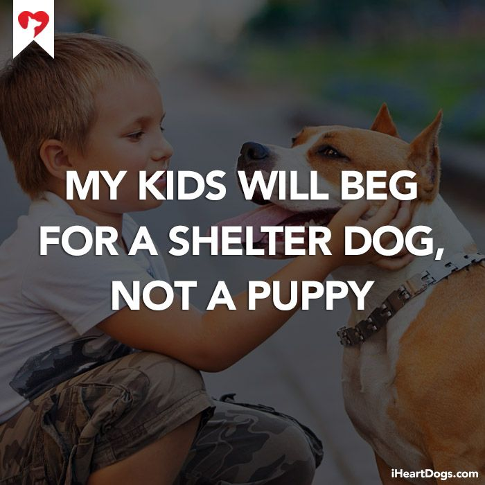 My Kids Will Beg For A Shelter Dog Not A Puppy Parentinggoals