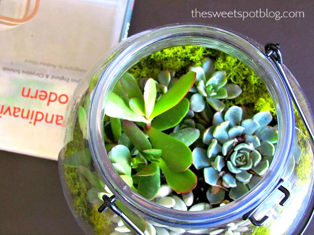 blumentopfhalter selber bauen, succulent micro garden, Design ideen