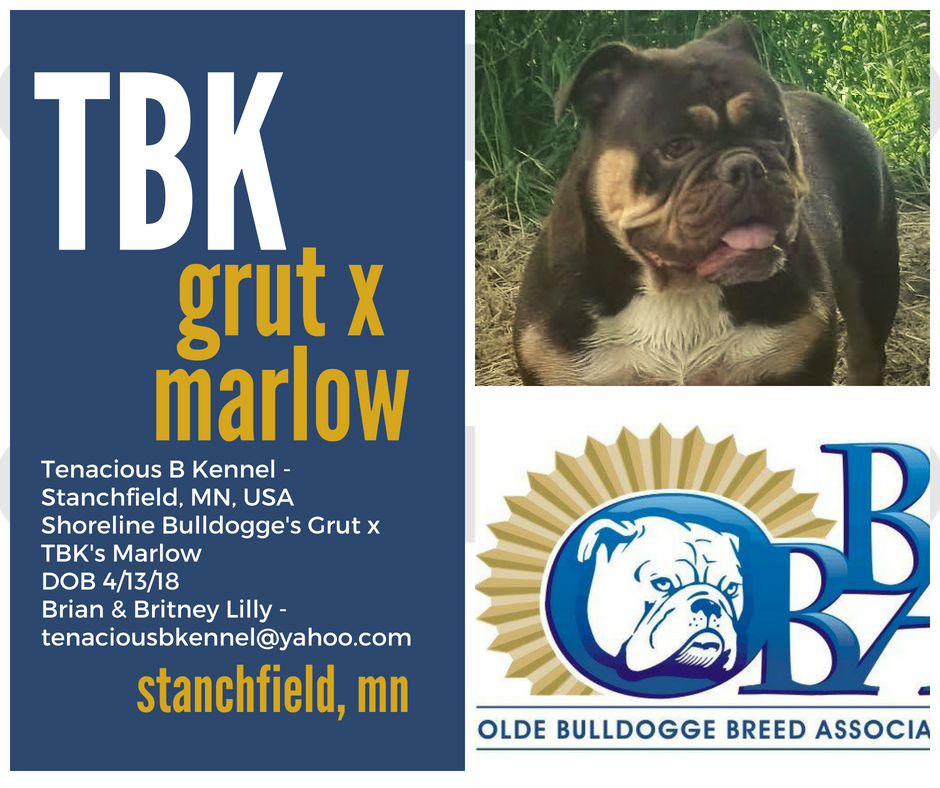Pin On Bulldogge Puppies For Sale