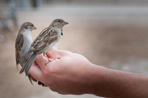 هواية الطيور Birds4hobby أنواع طيور الزينة صنف العصافير Birds Love Birds Animals