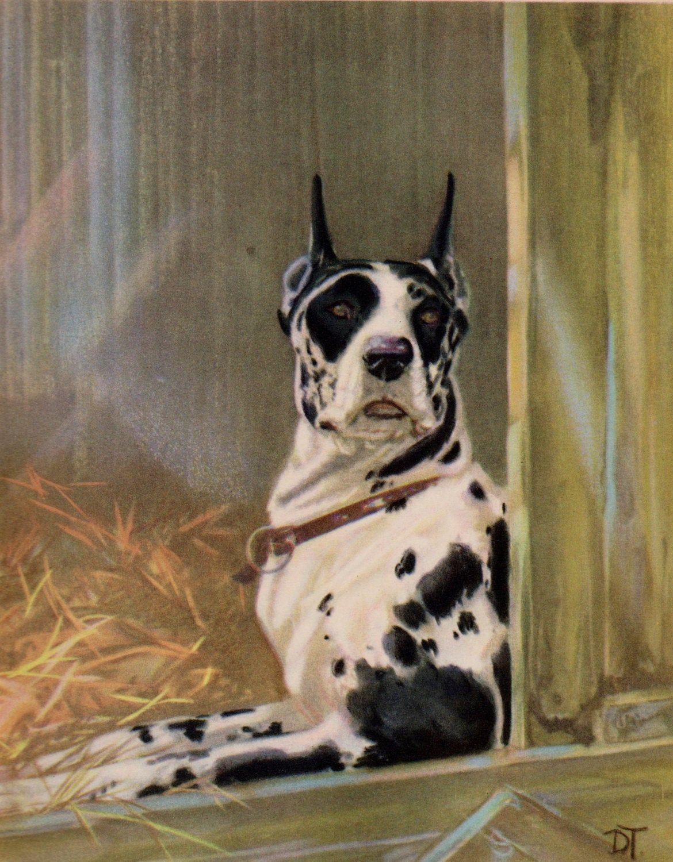 Antique 1930 S Great Dane Dog Print Harlequin Great Dane Dog Art