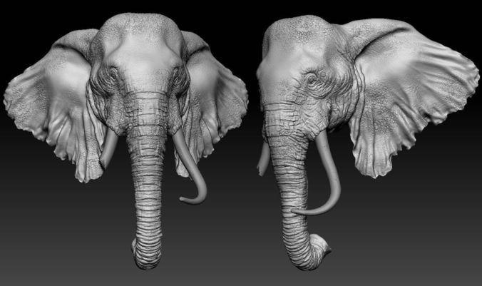 Https Img New Cgtrader Com Items 179128 2006890bf4 Elephant Head 3d Model Ztl Jpg