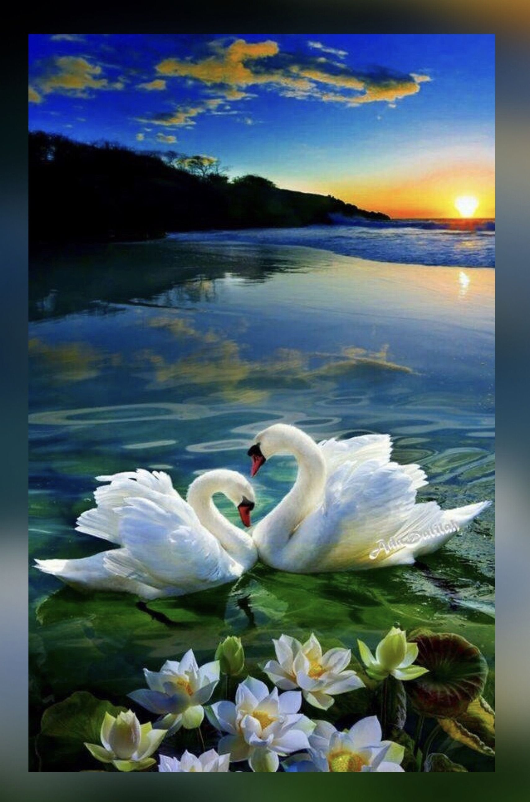 BEAUTIFUL WOMEN AT POND WITH FLOWERS /& SWANS PAINTING ART REAL CANVAS PRINT