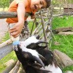 Toivosen eläinpuisto / Kokkola
