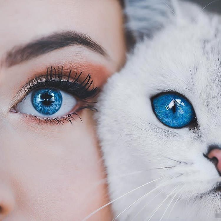 Why We Love Cats Family Systems Theory In 2020 Aesthetic Eyes Beautiful Eyes Color Beautiful Eyes