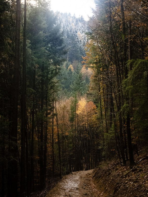 Woodland Path, Black Forest, Germany