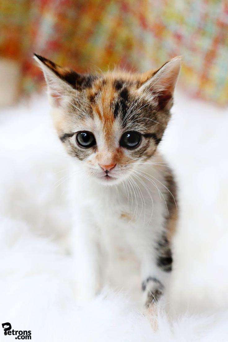 Innocence Should Never Be Taken For Granted Especially In The Case Of A Kitten Lol Cute Kitten Innocent Cat Poesje Egyptische Mau Schattig