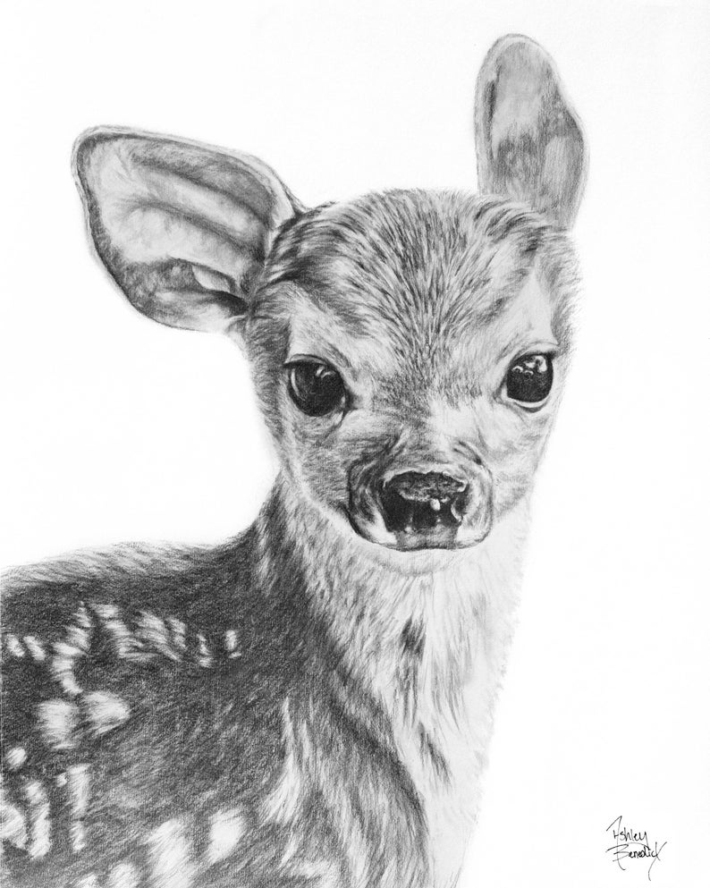 Fawn Pencil Drawing Giclée Print Baby Deer Baby Animals Deer Drawing Wildlife Art Home Decor Wall Decor Wall Art Fine Art Baby Nursery Art