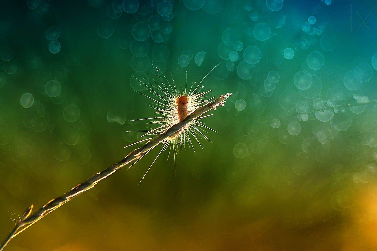 1X - caterpillar hairs by Eleven