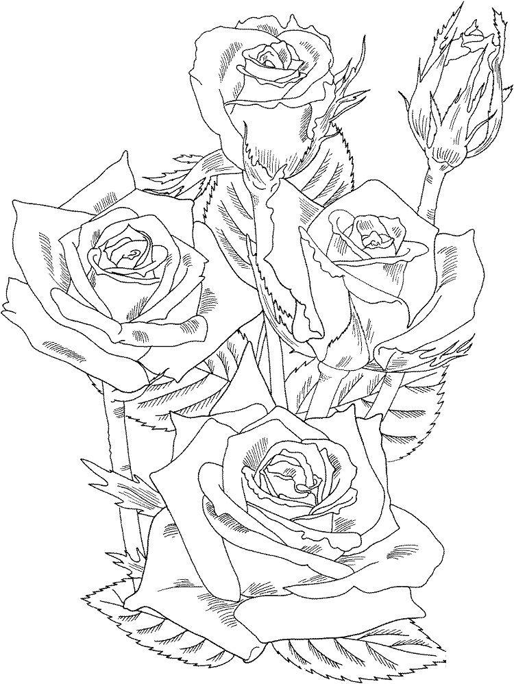 rose bush coloring pages