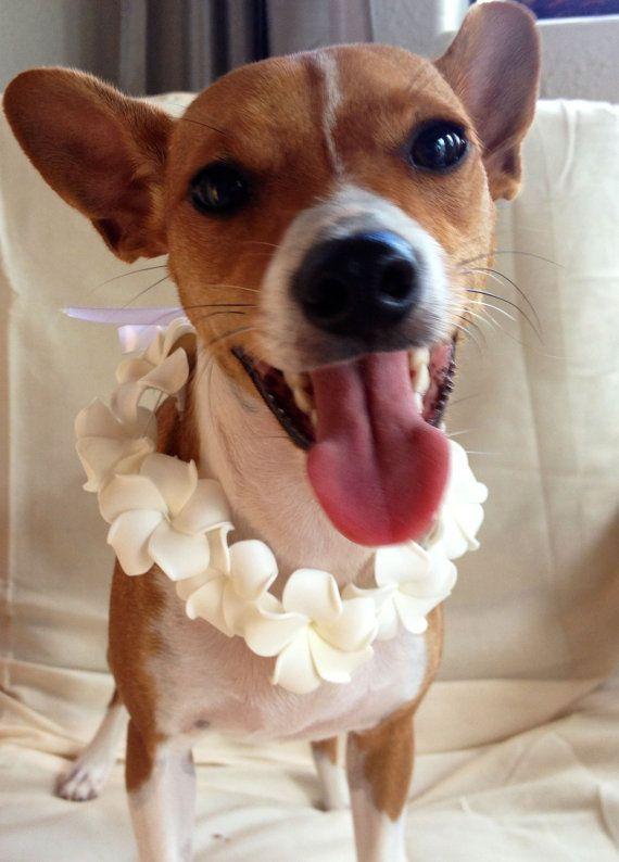 Dog Lei // Flower Collar// Tropical Wedding Dog Outfit ...