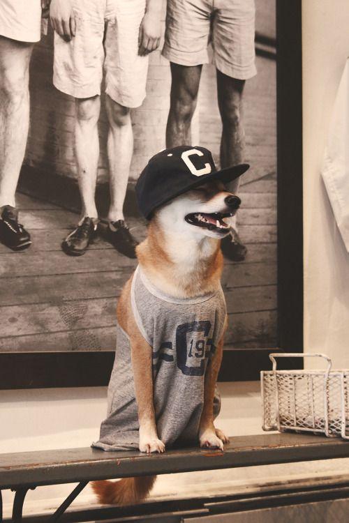 do you even lift bro aww so cute pinterest dogs