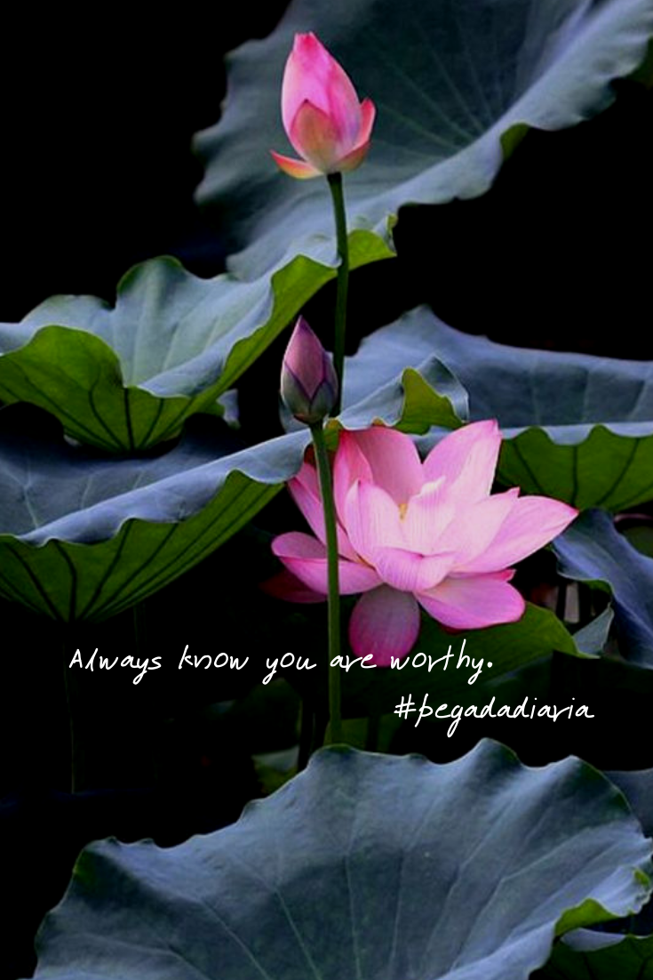 Always Know You Are Worthy Flower Beautiful Flowers Pink Lotus