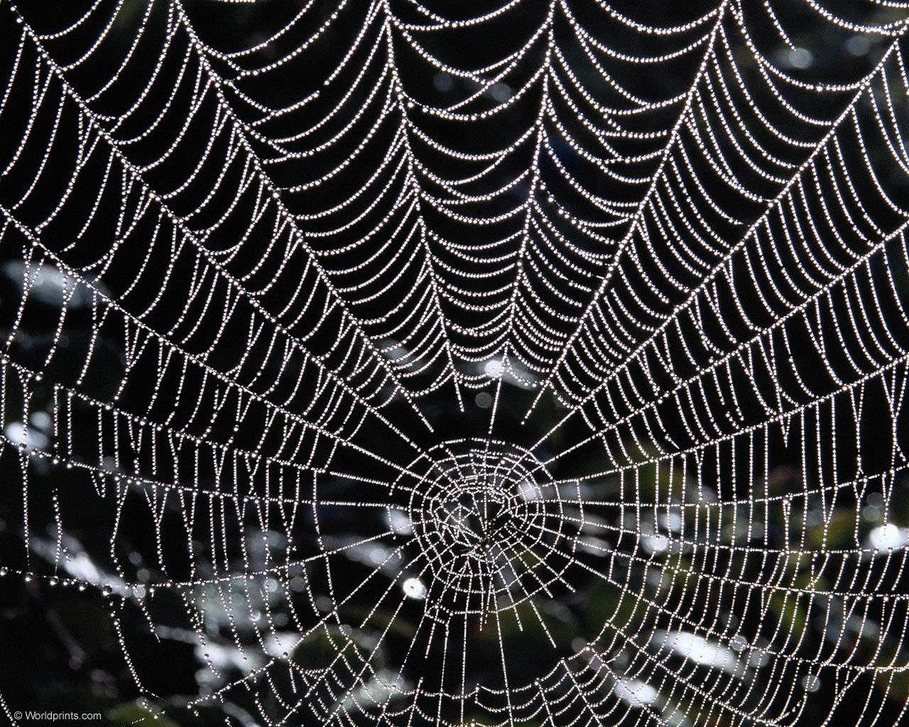Simple Wallpaper Halloween Spider - 555e76a7f02d1f477f11c7cc892fabab  Snapshot_955353.jpg