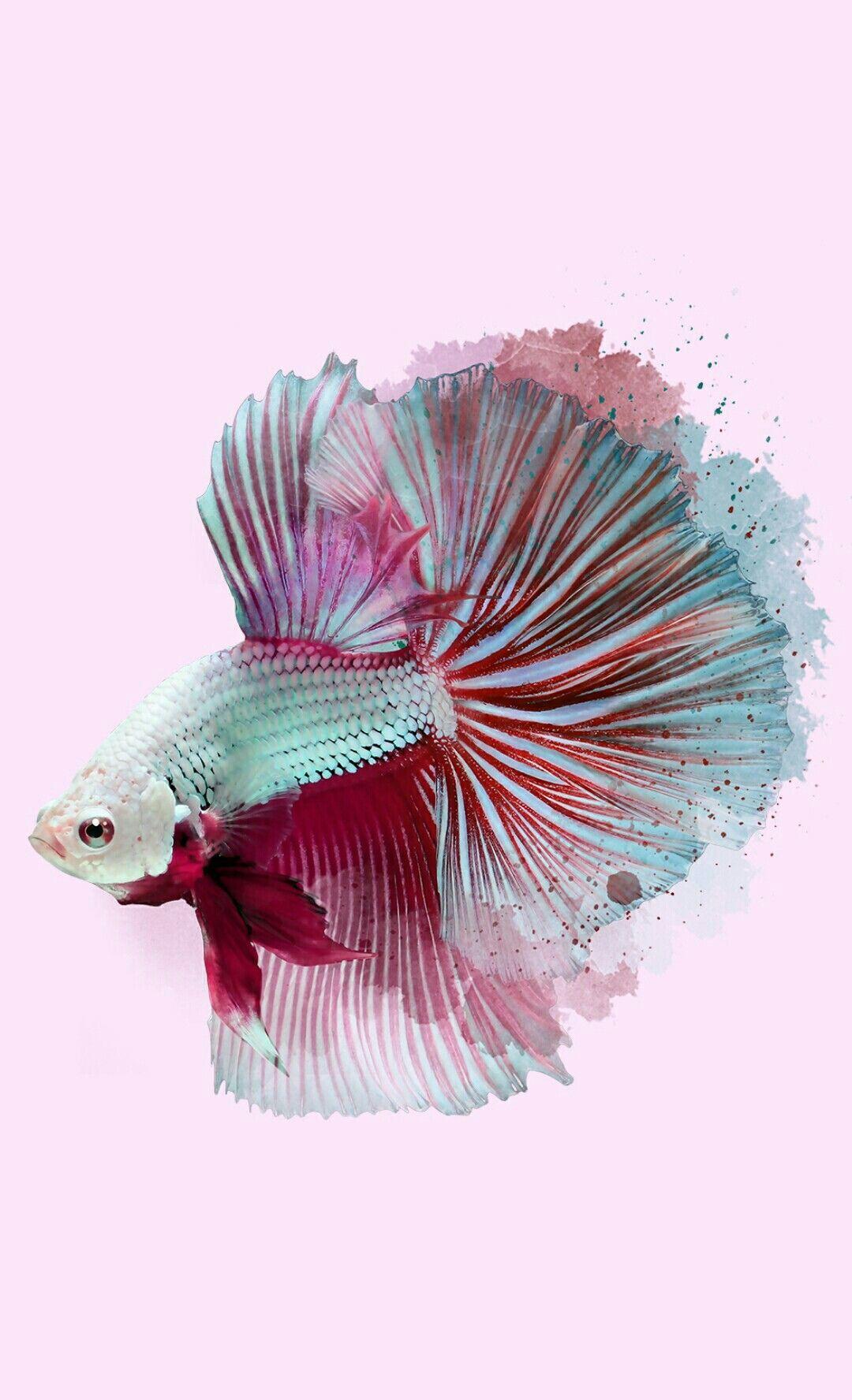 Pink Fish Wallpaper