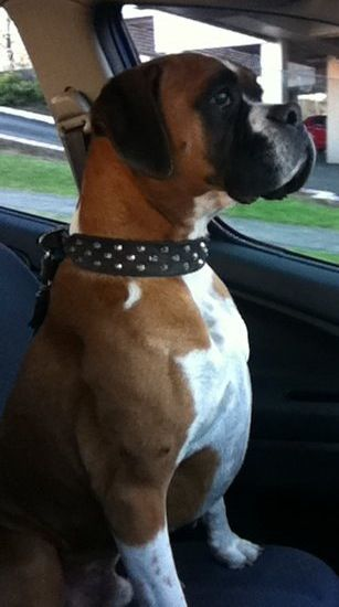 That proud boxer stance