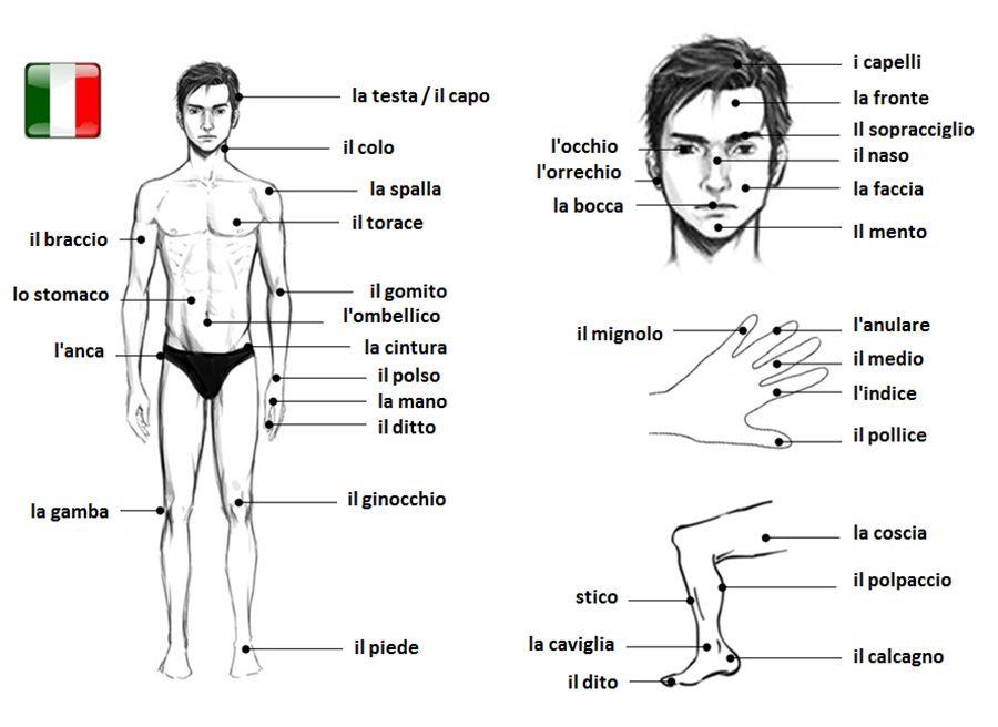 Famoso Le Parti del Corpo | Italian | Pinterest | Italian language  TG63