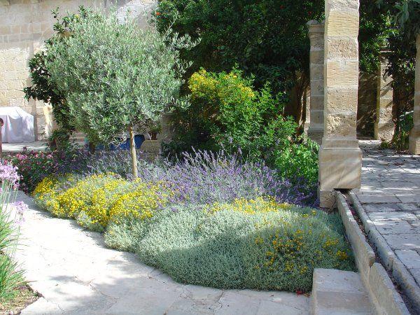 santolina, lavender, tulbaghia, westringia, phoenix, roebellenii ...
