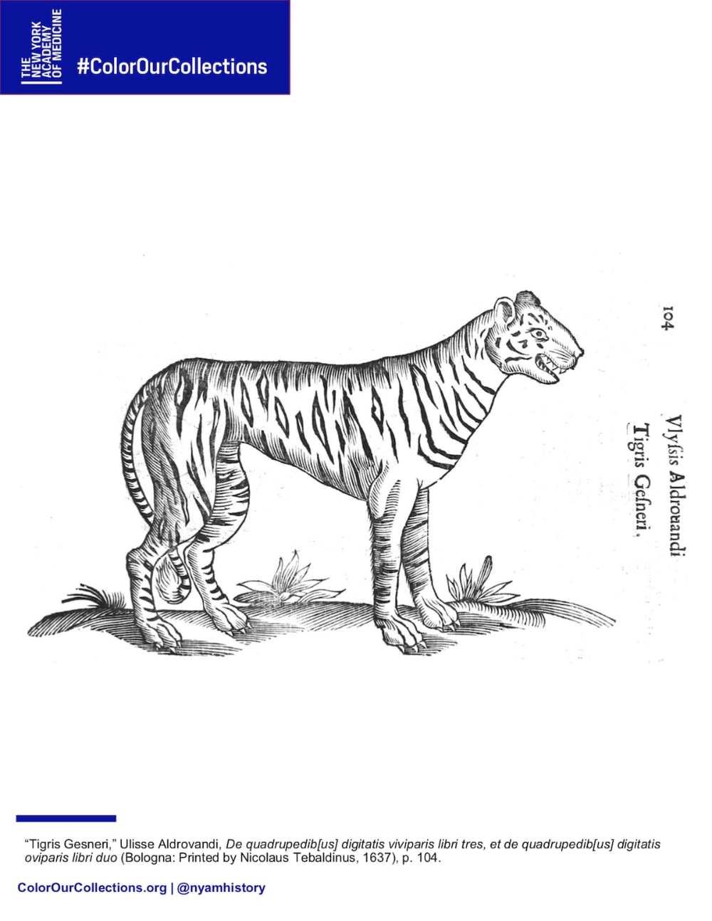 You Can Download Thousands Of Coloring Book Pages From Museum Collections From Around The World Coloring Books Coloring Book Pages Dinosaur Coloring Pages