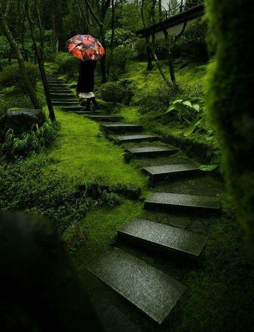 Summer rain, Japanese garden..