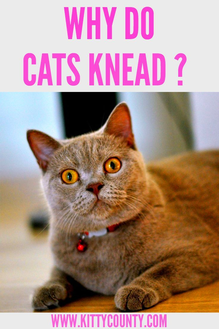 Pin on Cat Care Tips and Behavior