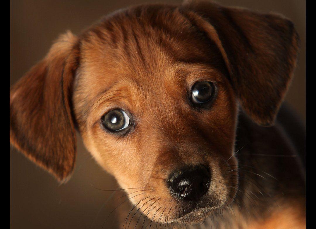 So Cute Dog Helps Elderly Owner Cute Puppy Names Puppy Dog Eyes Cute Puppies