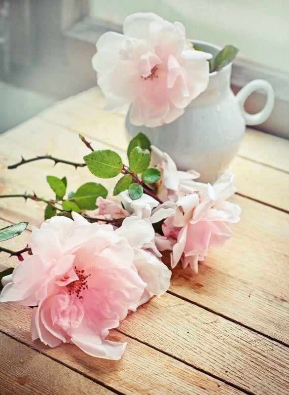 Fond D Ecran Fleurs Wallpapers Fleurs Flowers Fonds D Ecran