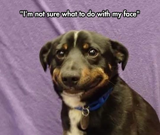 55631375b8ba3d66fc46f8f36b5eac7e not really sure what to do what to do, this is me and pictures,Smiling Dog Meme