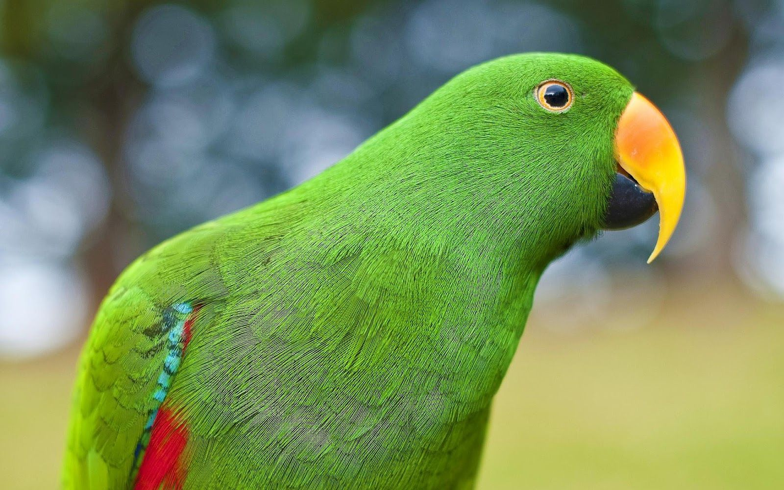Beautiful green google search email pinterest wallpaper parrots wallpapers hdq parrots wallpapers for free backgrounds voltagebd Images