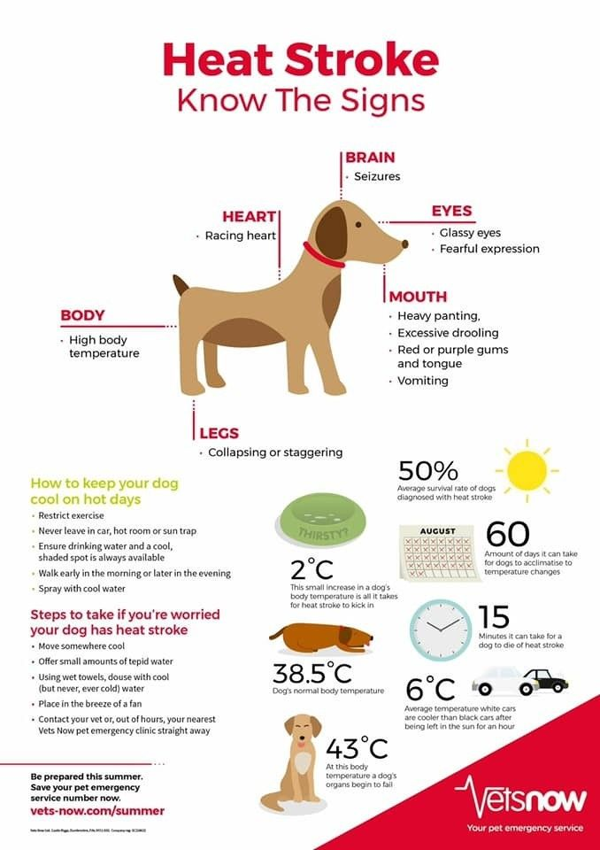 Pin by 🔱 BEA RUDD on DOGS The Holistic Approach To Dog's