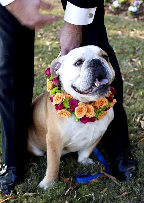 Wedding Bulldog Flower Crown Toni Kami Flowers In Their Coats