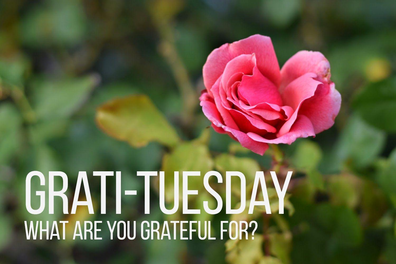 Gratituesday Google Search Gratitude Pinterest Gratitude