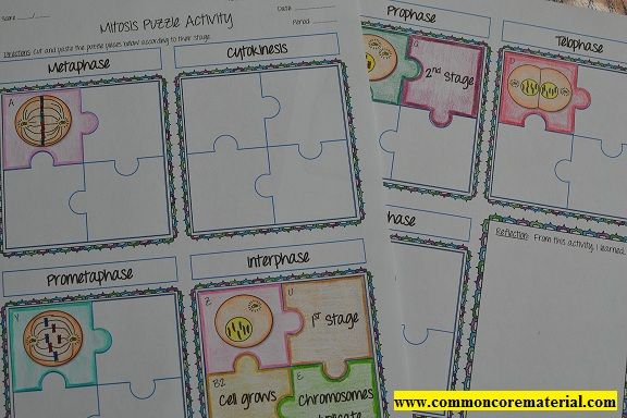 Mitosis Puzzle Activity | Mitosis, Common core math ...