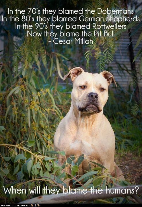 NO TRUER WORDS WERE EVER SPOKEN BY A MAN WHO KNOWS DOGS  GREAT GUY  @ ALL THE DOGS HE NAMED GET A BAD RAP Cesar Milan