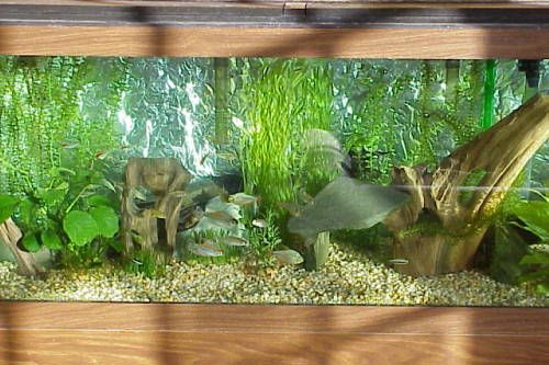 Fish tank ideas pictures of aquarium tank setups for for Fish tank setup ideas