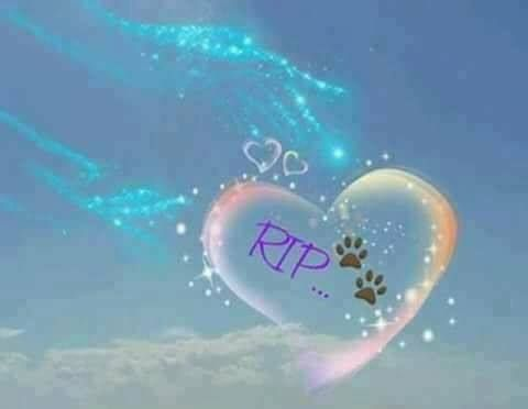 18157147 1401704739890954 4603470298361509334 N Jpg 480 372 Miss My Dog Pet Remembrance Pet Loss Grief