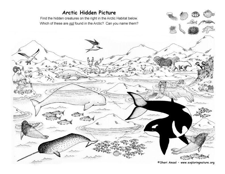 Arctic Hidden Picture Exploring Nature Educational Resource Arctic Habitat Arctic Animals Artic Animals