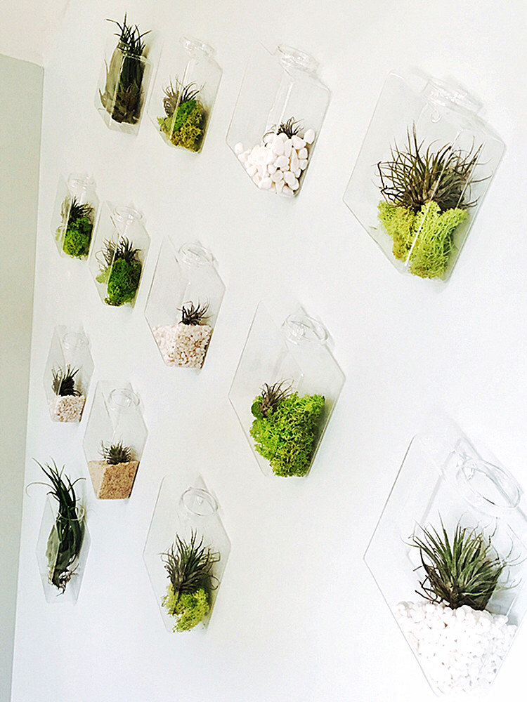 This Item Is Unavailable Wall Planters Indoor Glass Wall Vase Diy Wall Planter