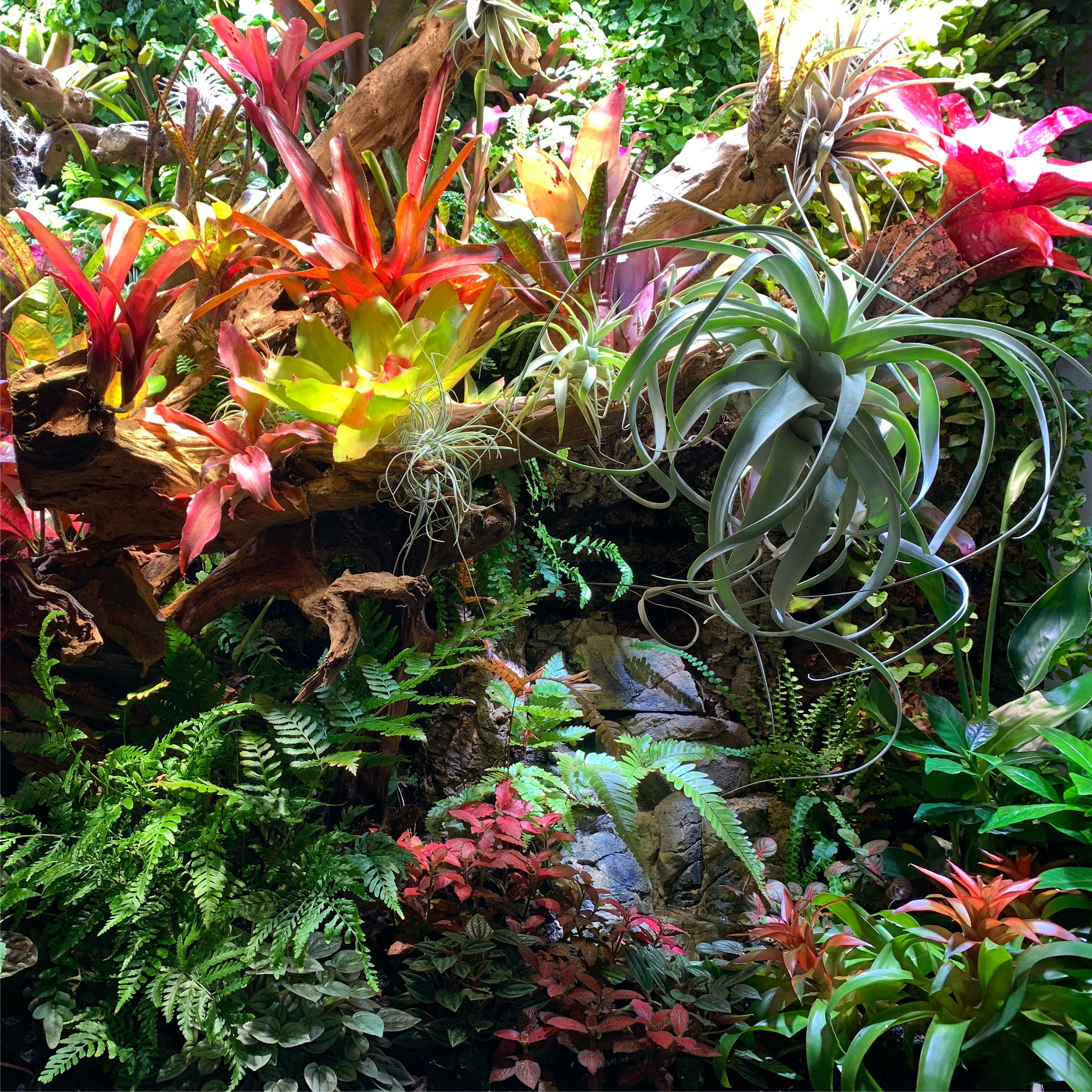 Wiwarium Tropical Garden Tropical Flowers
