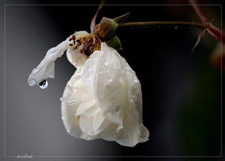 druppel..... | Natuur foto van annelies | Zoom.nl