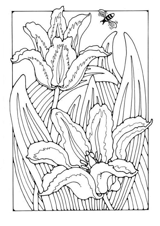 tulipanes | dibujos en blanco y negro | Pinterest | Colorear ...