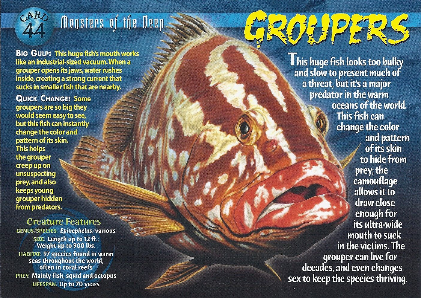 Grouper Fish Groupers or gropers are fish of any of a