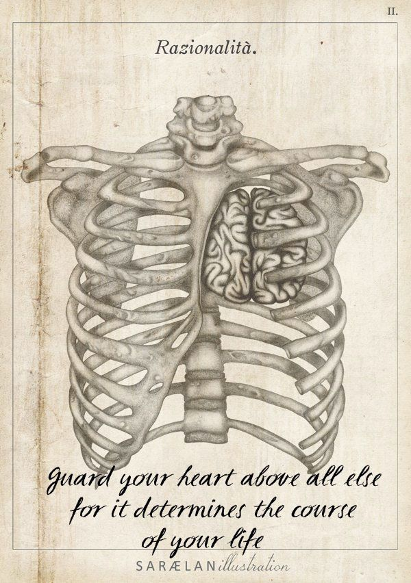 Guard your heart | ART | Pinterest | Anatomy, Anatomy art and Draw