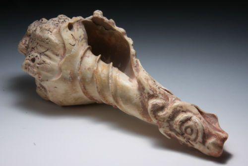 INCROYABLE-CONQUE-SCULPTEE-CULTURE-MAYA-250-600-RARE-CONCH-SHELL