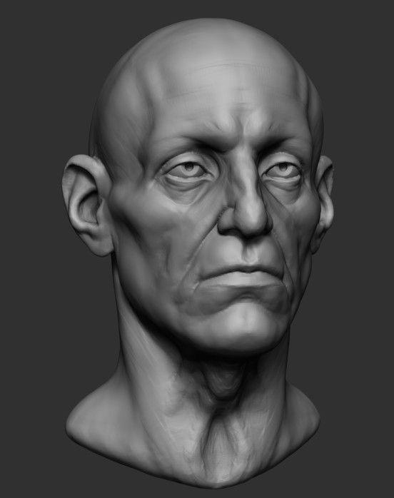 Male Head Base Anatomy Obj - 3D Model   Sculpts   Pinterest ...