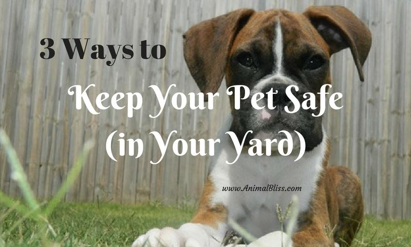 3 Ways To Keep Your Pet Safe In The Yard Free To Roam Pet Safe