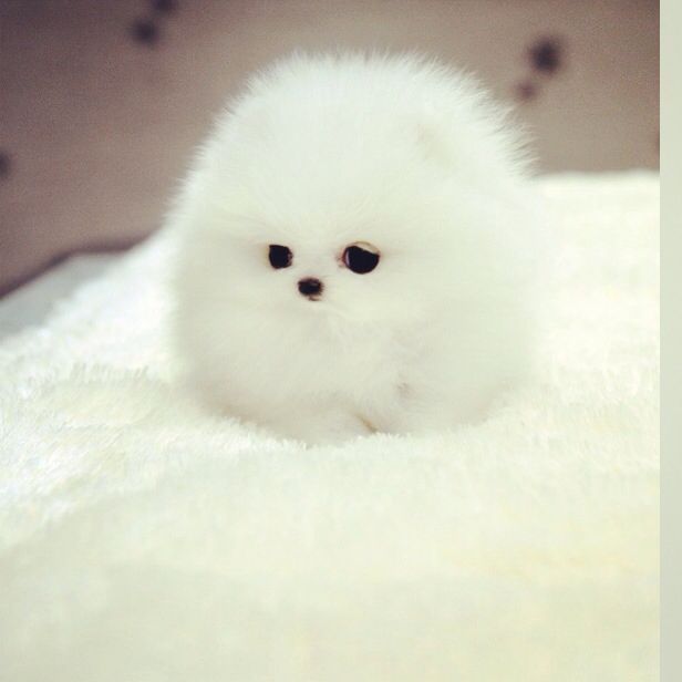 What a fluffy hedgehog!  Share it if you like it!   #fluffy #cute #cuteanimal #hedgehog #cutehedgehog #baby  #babyanimal #joke