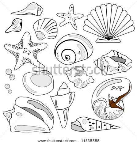 how to draw conch shell | Vector Download » Sea Shell Collection ...