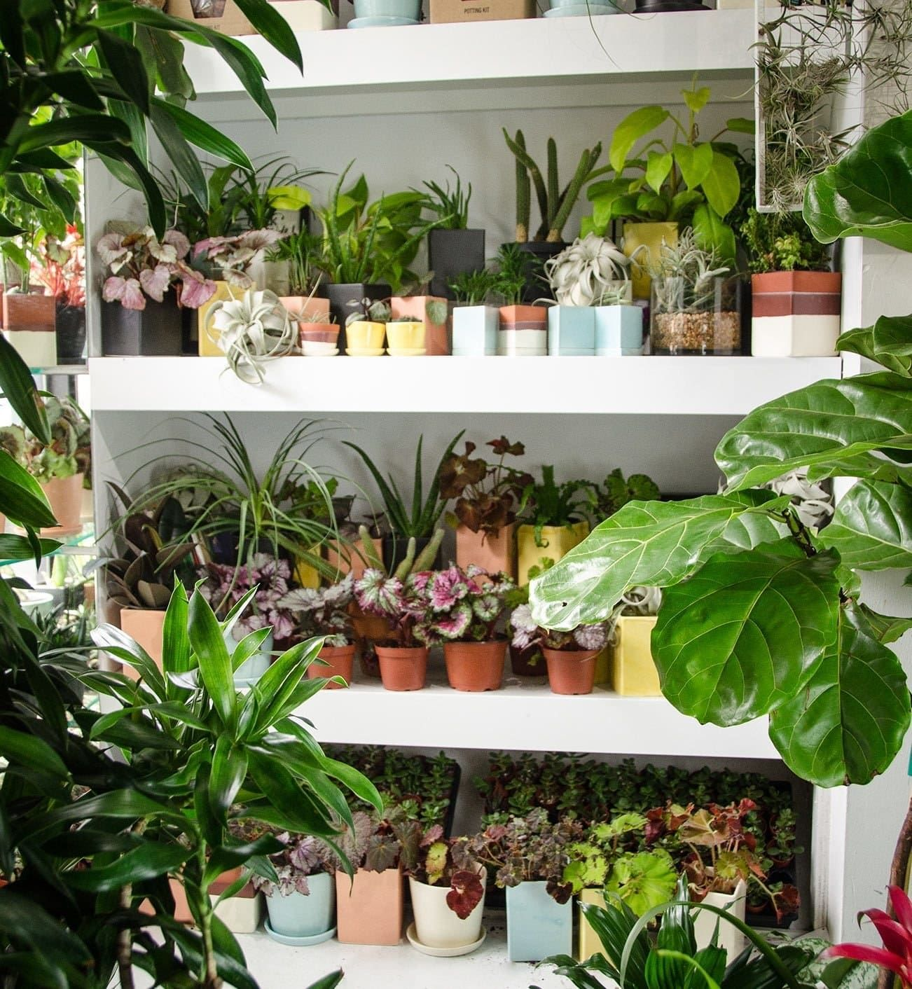 17 Of The Best Places To Buy Houseplants Online Small Indoor